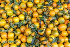 Tangerins 免版税库存图片