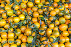 Tangerins. Market in Forcalquier, Provence, France Royalty Free Stock Image