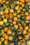 Tangerins. Market in Forcalquier, Provence, France Royalty Free Stock Photos