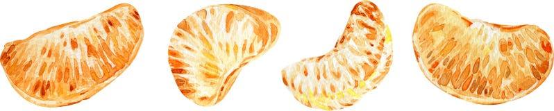 Tangerinskivor bakgrundscitrusfrukter isolerade white för flygillustration för näbb dekorativ bild dess paper stycksvalavattenfär royaltyfri illustrationer