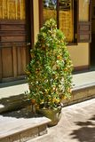 Tangerinträd i gatan Arkivbild