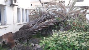 Dead tree. Tangier city beach Stock Image