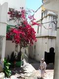 Tangier. City old medina 2017 Royalty Free Stock Photography