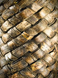 Tangle of birch bark Royalty Free Stock Photos