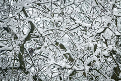 Tangle of branches. Showered of fresh snow Stock Images