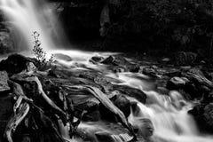 Tangle Cree Falls. Landscape featuring Tangle Creek Falls from Jasper National Park.  Monochrome image Stock Photos