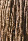Tangle of dreadlocks. Closeup of a rasta hair royalty free stock images
