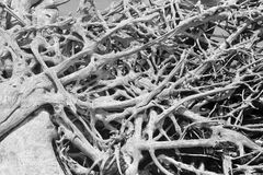 Tangle of Driftwood in Black and White Stock Images