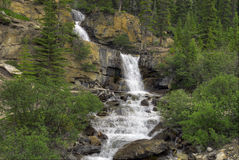 Tangle Falls Royalty Free Stock Image