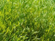 Tangle of the grass Royalty Free Stock Image