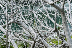 Tangle of Grayed Dead Tree. In front of aqua lake Royalty Free Stock Photo