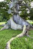 Tangle of tree. Tree with a tangle of roots above ground Stock Photography
