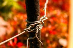tangled imagem de stock