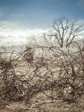 Tangled barbed wire in the west. Tangled old barbed wire fencing on an abandoned ranch in the west Stock Image