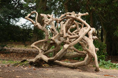 Tangled Branches of a Dead Tree. In Westonbirt, Wiltshire, England Stock Photography