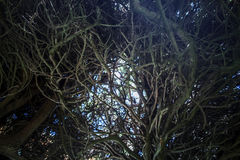 Tangled branches stock image