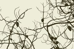 Tangled branches. Vector drawing of the branches of the pine tree Stock Photos