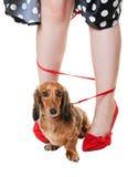 Tangled Dachshund Dog Royalty Free Stock Photos