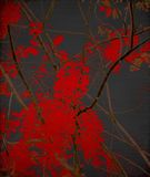 Tangled red blossom branches on black Stock Image