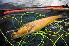 Tangled trout Royalty Free Stock Photography