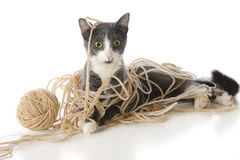 Tangled-Up Kitty Royalty Free Stock Photography