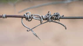 Tangled Vine Tendrils on Wire. Stock Image
