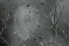 Tangled Web Royalty Free Stock Images