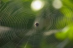 Tangled web Royalty Free Stock Photos