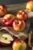 Tango dolce organico rosso crudo Gala Apples Fotografia Stock Libera da Diritti