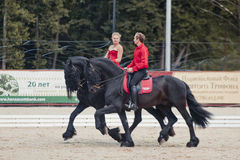 Tango on the Friesian horse Royalty Free Stock Images