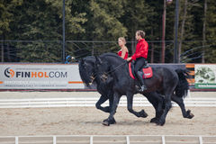 Tango on the Friesian horse Stock Images