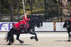Tango on the Friesian horse Royalty Free Stock Image