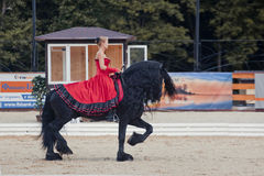 Tango on the Friesian horse Royalty Free Stock Photography