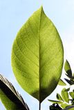 Taning leaf. Plants in the sun stock photos