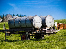 Tank on a field with cow. In background Royalty Free Stock Photo