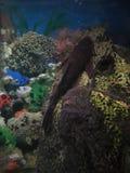 Tank fish. Stock Photos