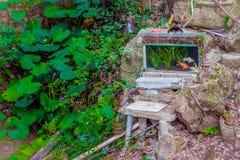 Tank of goldfish in wasted backyard. Hong kong Stock Photography