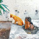 Tankar av en guld- katt royaltyfri fotografi