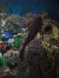 Tankvissen Stock Foto's