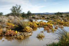 Tankwa南部非洲的干旱台地高原的沼泽地 免版税库存图片