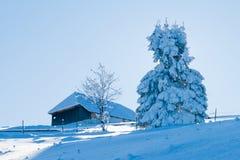 Tanne abgedeckt mit Schnee gegen Leuchte Stockbild