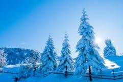 Tanne abgedeckt mit Schnee gegen Leuchte Lizenzfreie Stockfotos