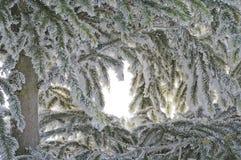 Tanne im Schnee. Lizenzfreie Stockfotos
