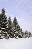 Tanne im Schnee Lizenzfreie Stockfotografie