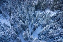 Tanne im Winter Stockbild