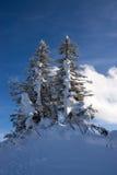 Tanne im Winter Lizenzfreie Stockfotografie