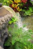 Tanne und Wasserfall stockbilder