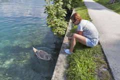 Tanned caucasian woman feed wild young swan in Bled, Slovenia Stock Photography