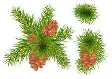 Tannen-Baum-Zweige lizenzfreie abbildung