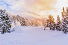 Tannen mit Sonnenaufgang, Winter Lizenzfreie Stockbilder